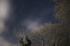 The winter sky at night through trees and clouds.