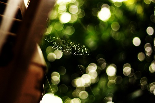 London Rain and Web 2