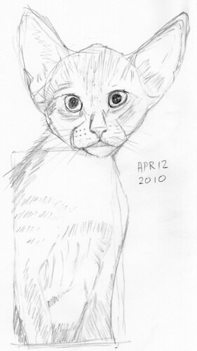 Cute kitten, drawn live on April 12, 2010