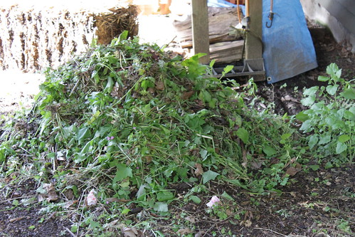 my new compost pile.  My shoulders are tired.