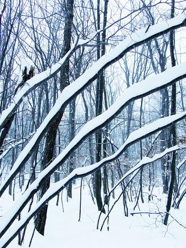 snow on witch hazel