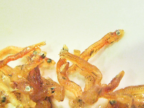tiny fried fish