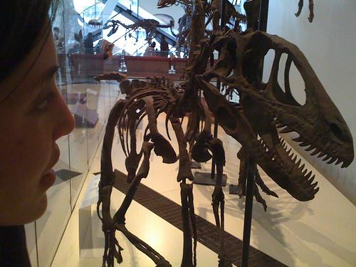 Stare Dino