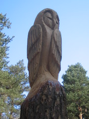 Errington Woods Owl Carving