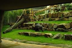 366 - 2017 07 01 - Gorillaverblijf vanuit de grot