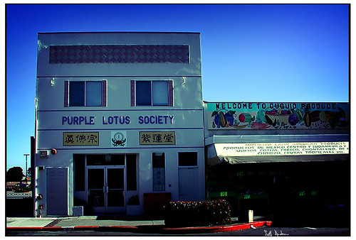 Purple Lotus Society - Lomo