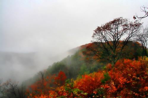 Foggy Autumn Morn