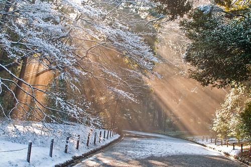Snowy Tokyo