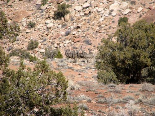 Some Blurry Deer