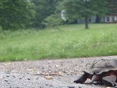 Turtle butt