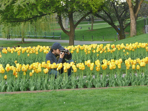 Shooting tulips