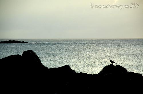 Birdwatching, Calaguas Island, Camarines Norte