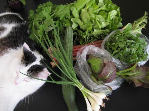 CSA Vegetable Bag week 20, 2010