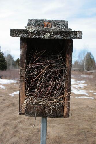 House Wren nest in nestbox
