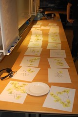 Lots of yellow raffle tickets on A4 sheets of paper