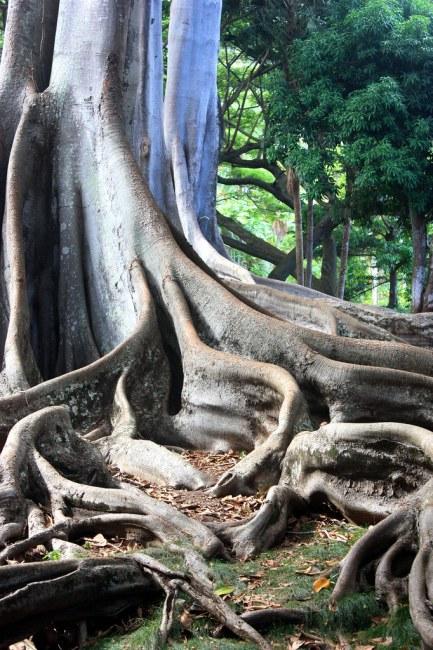 Jurassic Trees