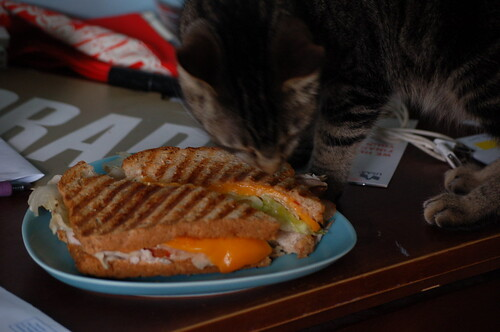 Mr. Bones inspects my turkey sandwich from Franks Deli.