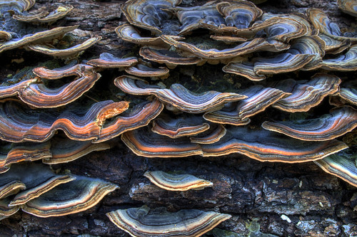 West Fork Fungi