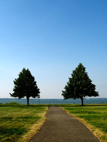 a portrait of two trees in lachine