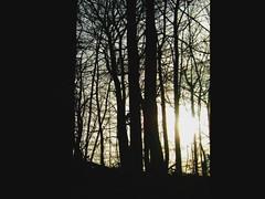 Ash Trees by Paul Walker