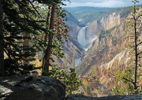 USA_136_Yellowstone_53