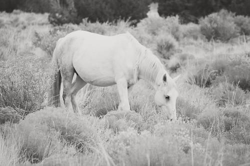 NM Wild Horses nwm (48)