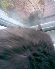 Cat and Squirrel