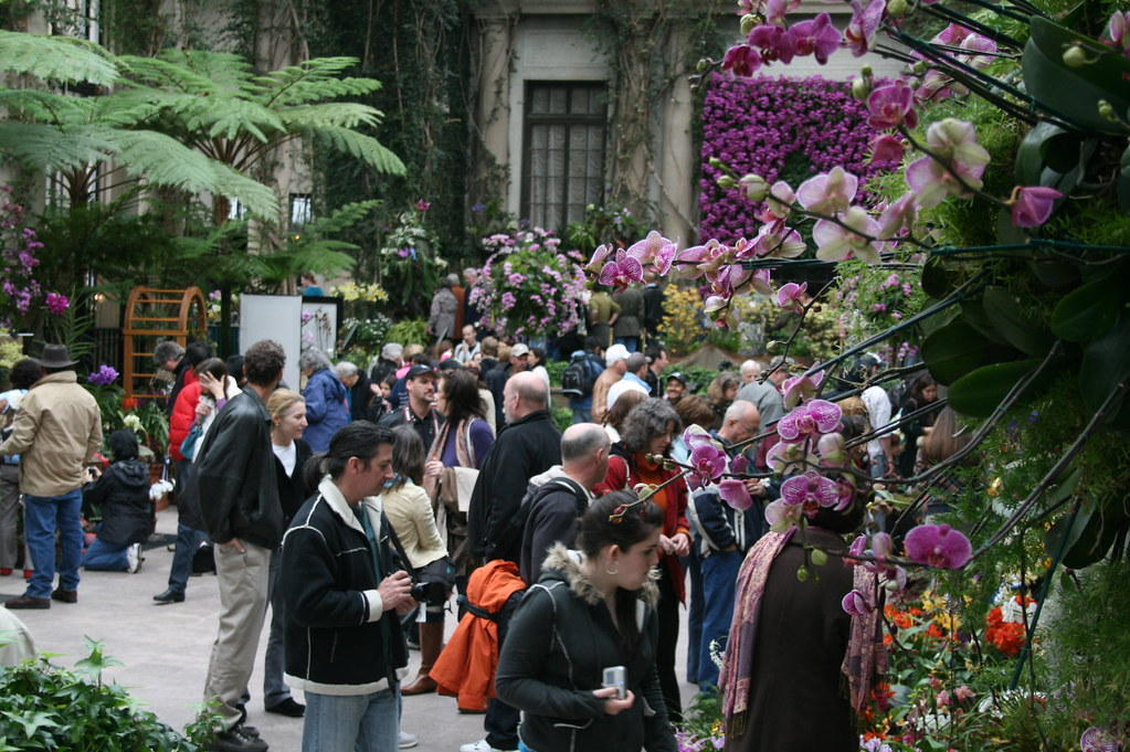 The crowd checking out the orchids under competition