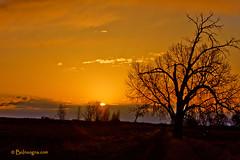 Country Golden Sunrise