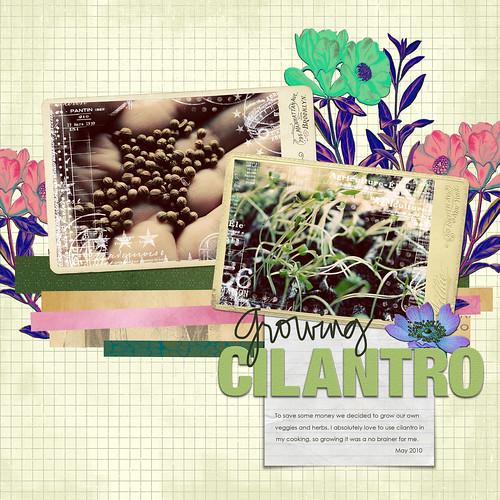 Growing Cilantro digital layout