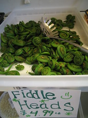Last Spring's Fiddleheads