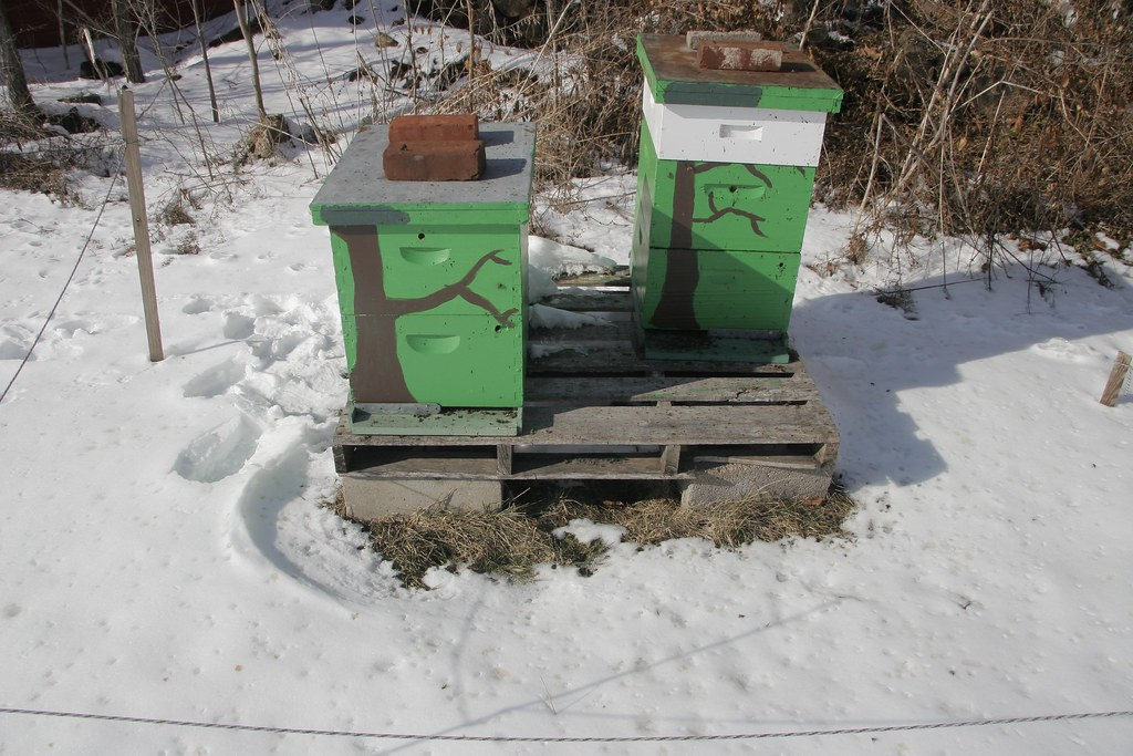 Hives on a sunny winter day