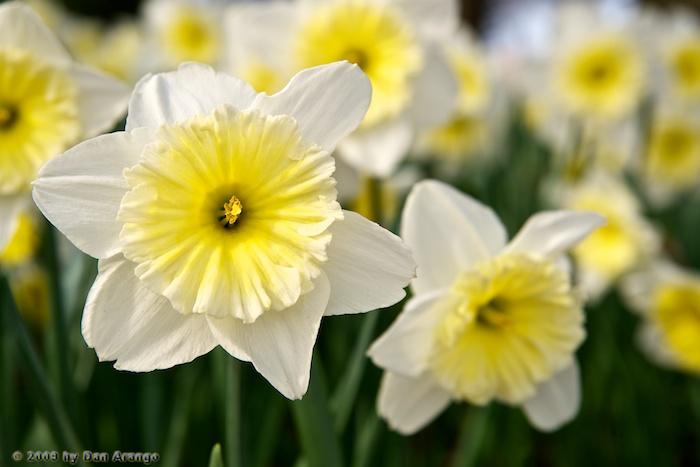 Georgetown Spring