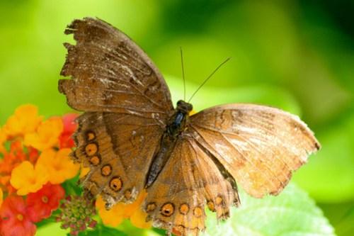 Butterfly at Butterfly Garden - 2