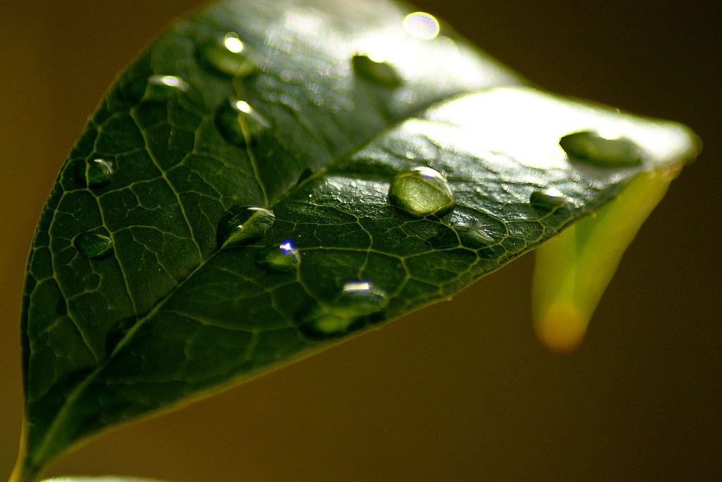 Leaf with raindrops small