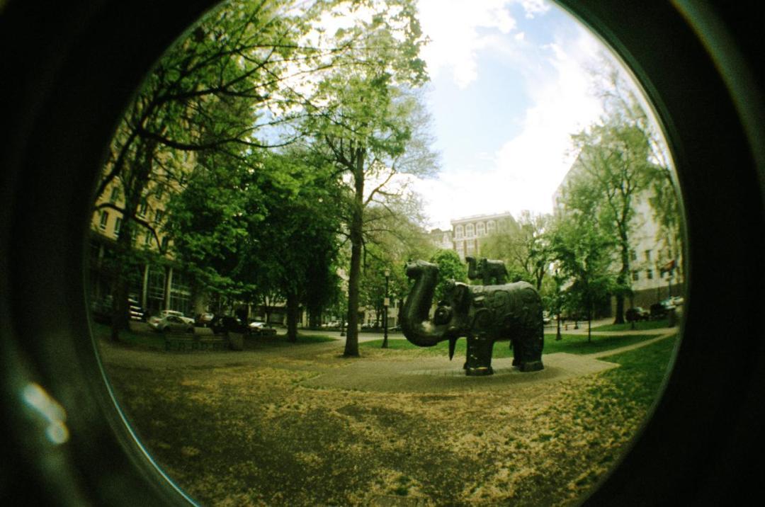 elephant hunt (by rocketcandy)