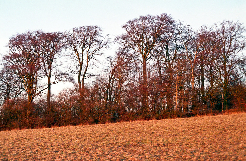Wittenham Clump | Castle Hill | 1