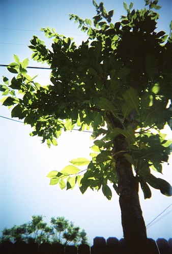 bbf - backyard tree