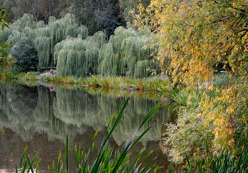Осень. Природа. by ocherik