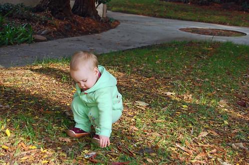 feb leaves
