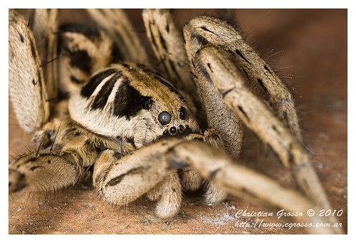 "Araña • <a style=""font-size:0.8em;"" href=""http://www.flickr.com/photos/20681585@N05/4518321892/"" target=""_blank"">View on Flickr</a>"