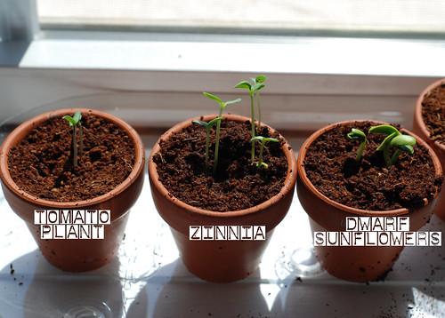 Plants Update