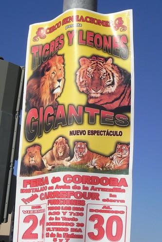 Circo Sensaciones en Córdoba.