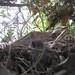 Baby bird is put back into its nest, Mary Cummins, Animal Advocates
