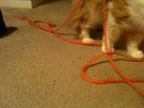 Popo loves string.