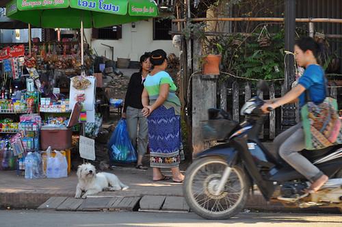 Market Dog