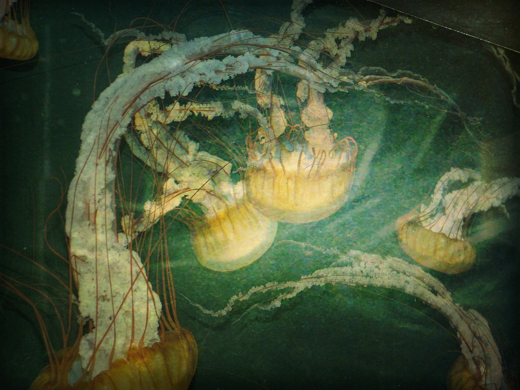 jellyfish texture
