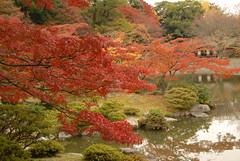 Sentō-gosho Garden, Kyoto
