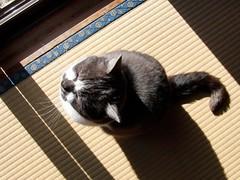 Basking in the sunshine