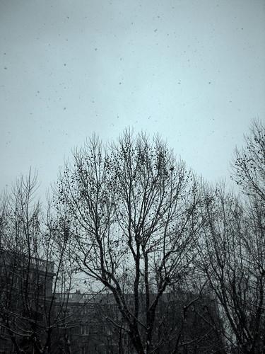 First Snow December 2009 - 19th arr